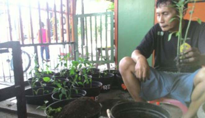 BI Gagas Program Urban Farming